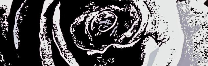 cropped-rose123.jpg